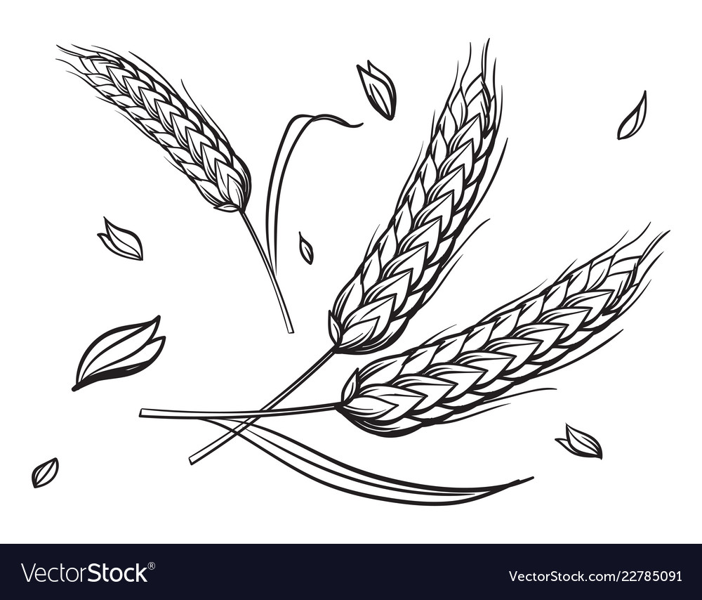 A few ears of wheat on a beige background hand