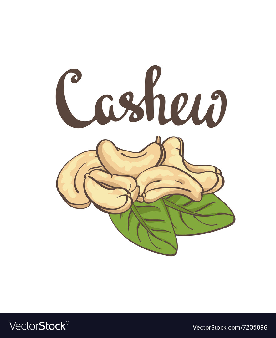 Cashew kernels and leaves