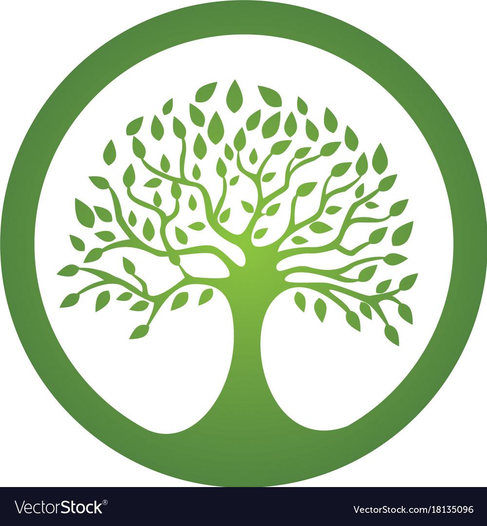 family tree logo template royalty free vector image
