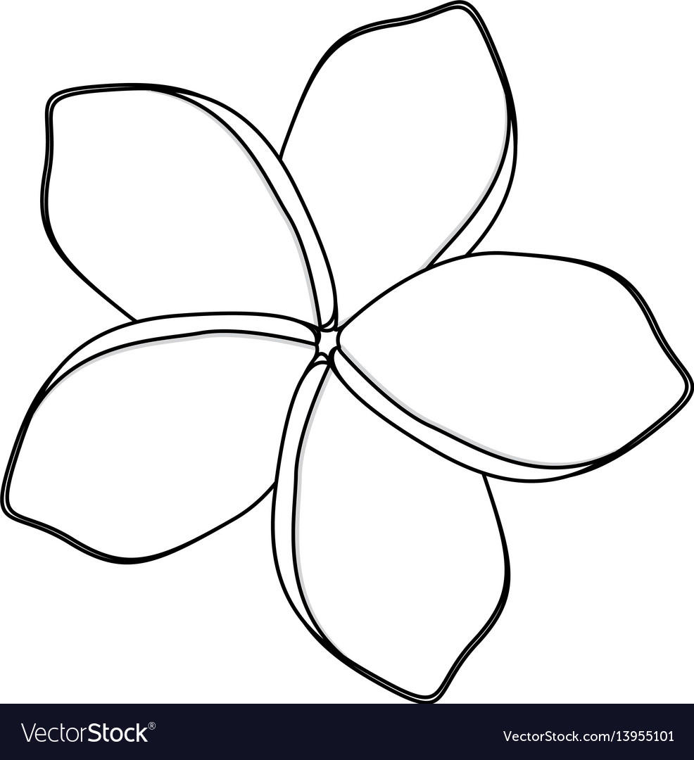 Silhouette Flower With Oval Shaped Petals Vector Image