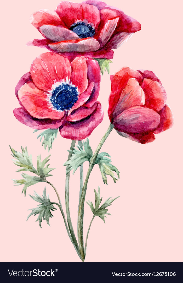 Watercolor red anemone flower royalty free vector image watercolor red anemone flower vector image mightylinksfo