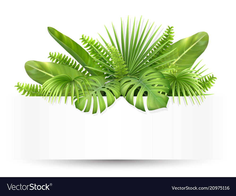 Banner with tropical leaves