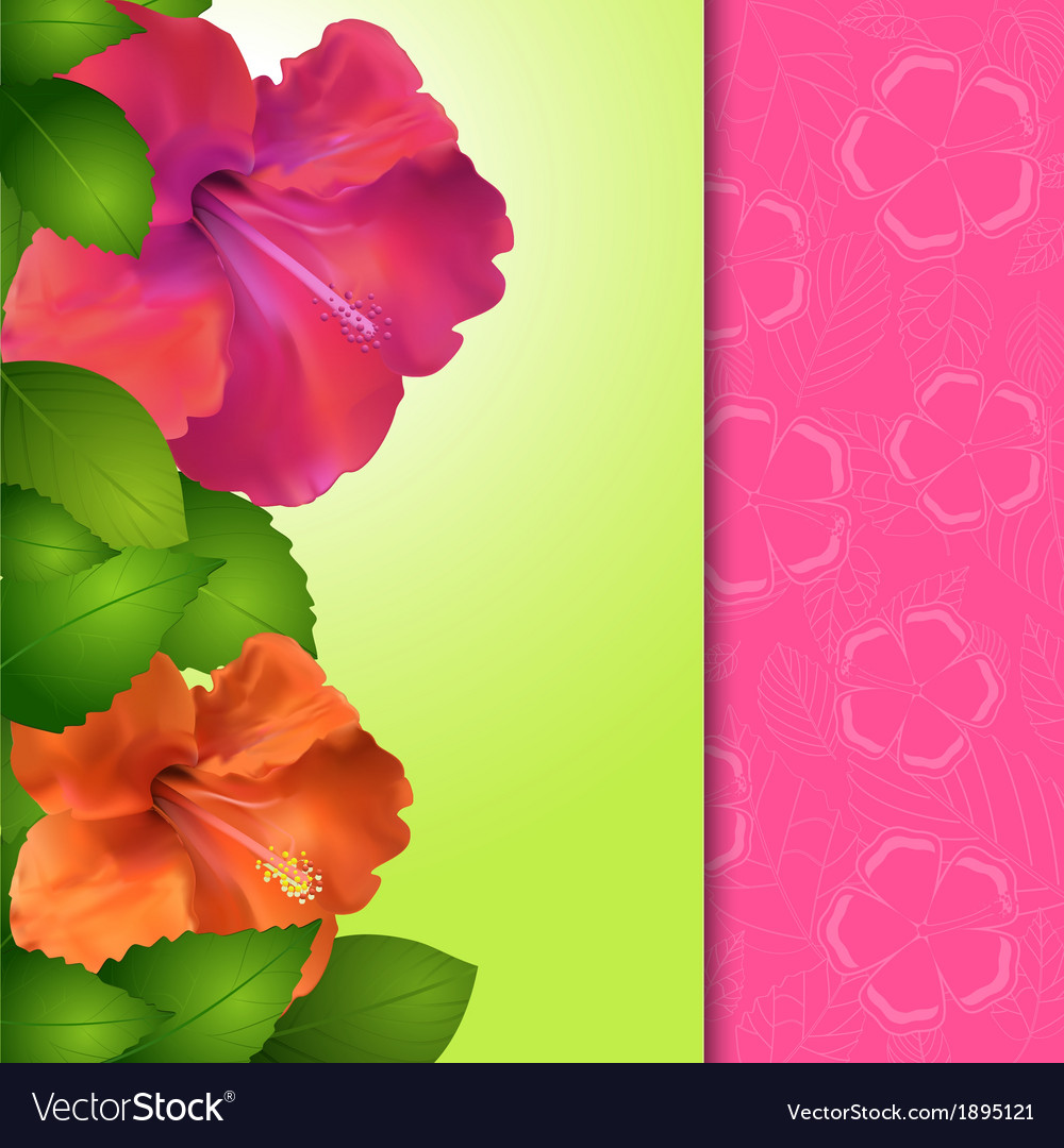 Hibiscus Flower Panel Border Royalty Free Vector Image