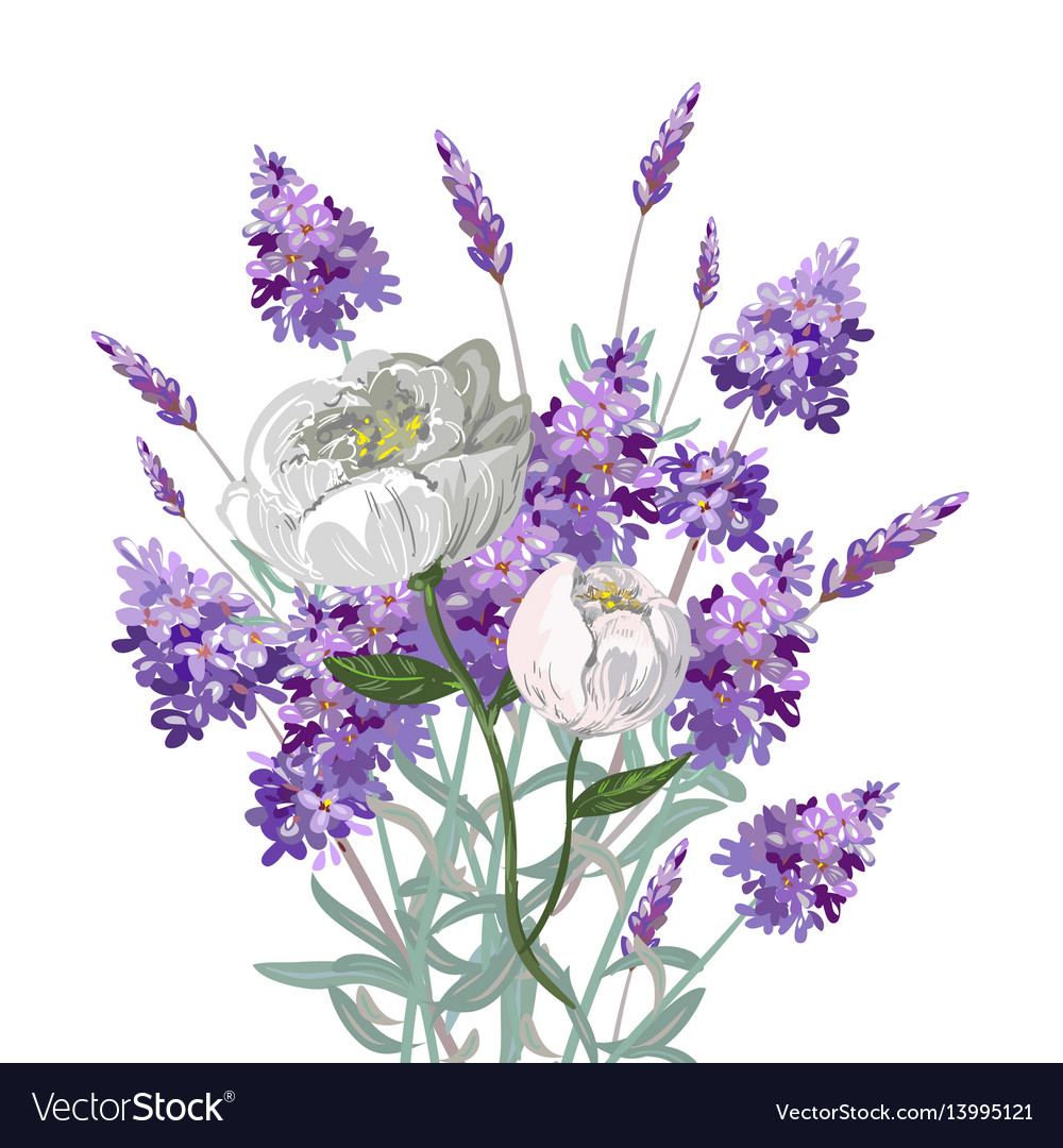 Lavender And Peony Bouquet Royalty Free Vector Image