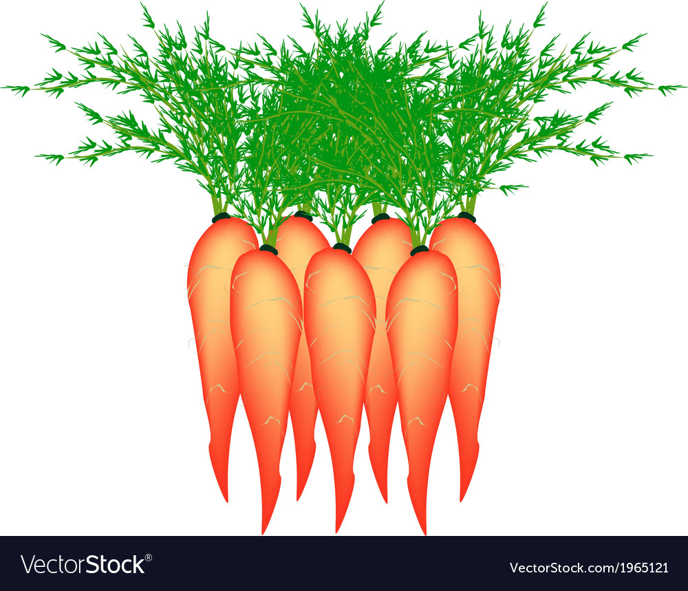 Stack of Delicious Fresh Carrot