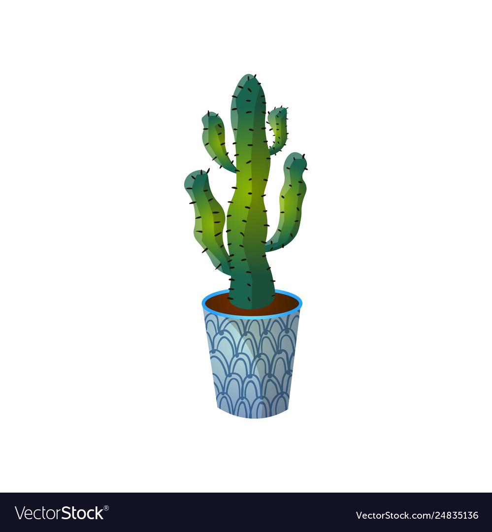 Dessert green colorful cactus in blue striped pot