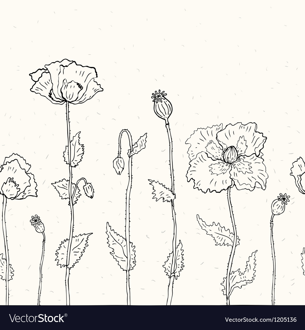 Floral background Hand drawn Poppies