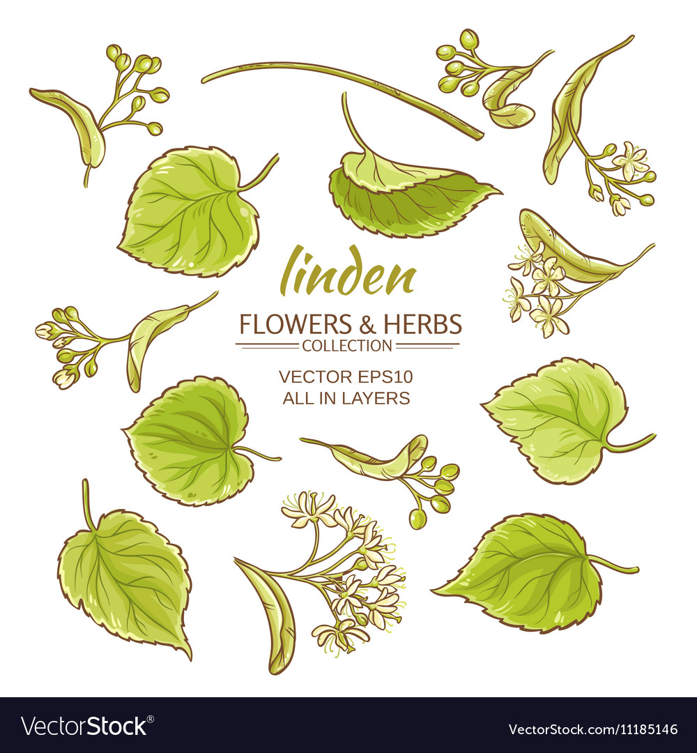Linden set