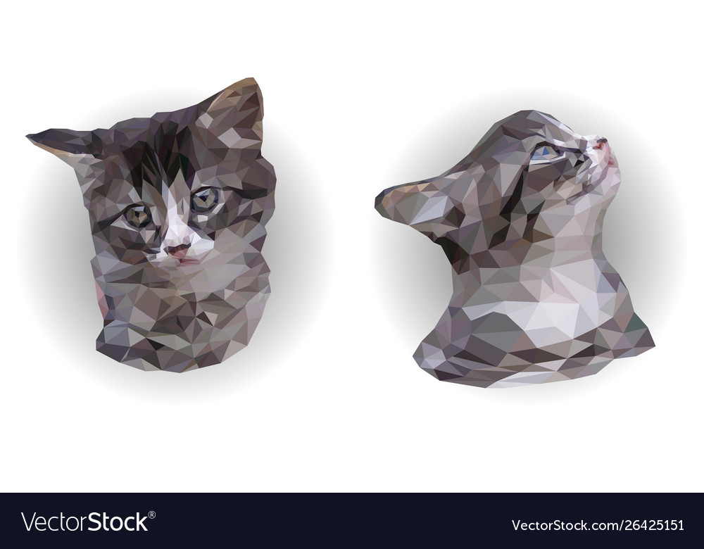 Two portraits gray and white kitten poly art