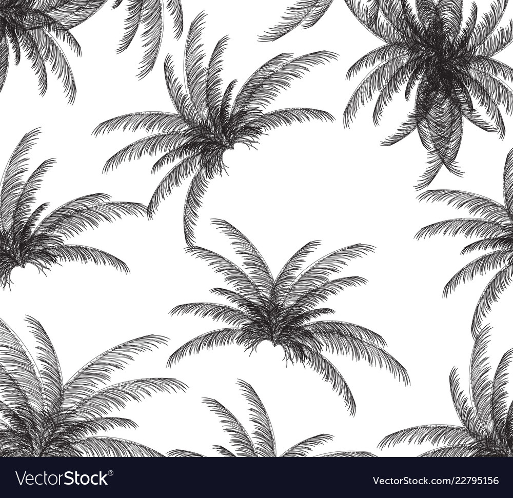 Palm silhouette on white background