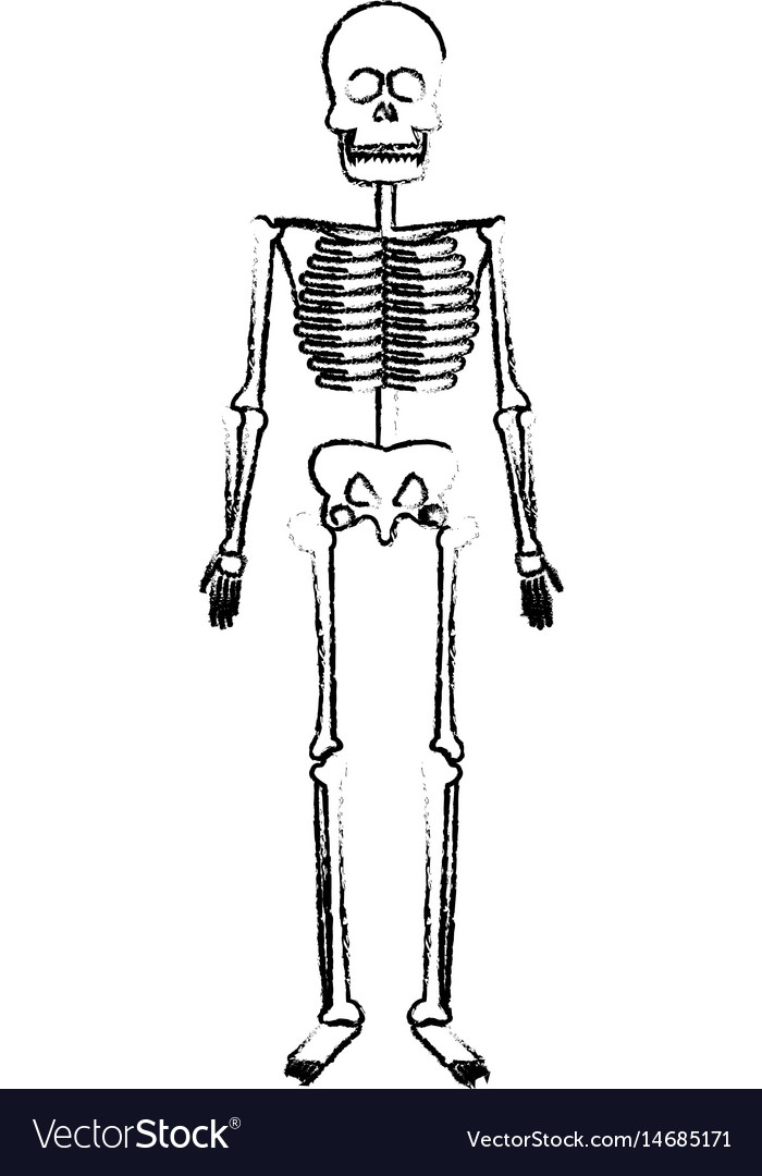 Skeleton Human Body Bones Medical Royalty Free Vector Image