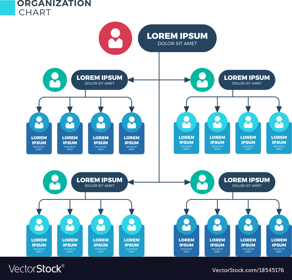 Business structure of organization vector image