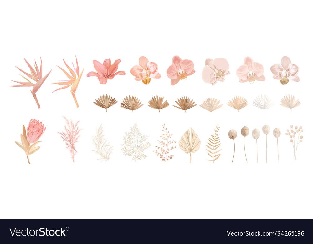 Elegant dry protea flower tropic palm pale