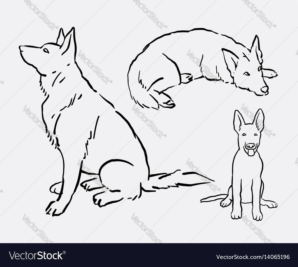 German Shepherd Pet Dog Animal Hand Drawing Vector Image - German-shepherd-drawings