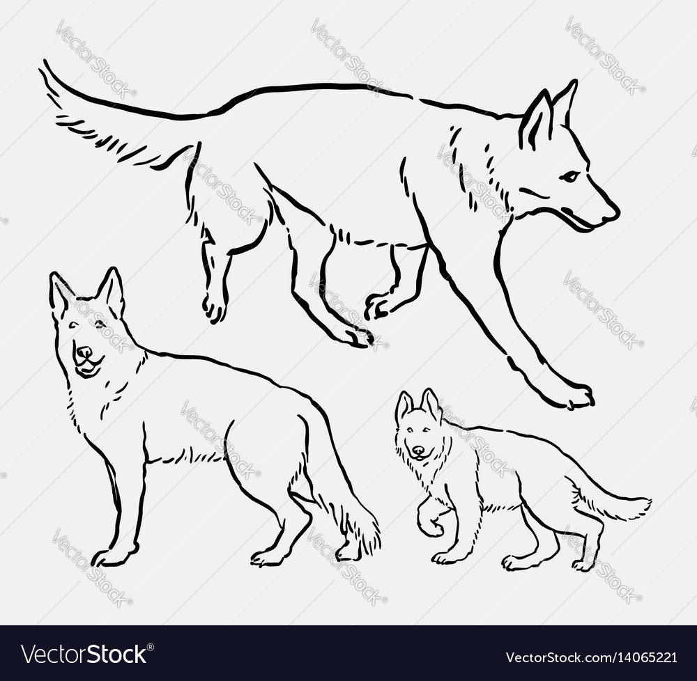 German shepherd pet dog animal sketch