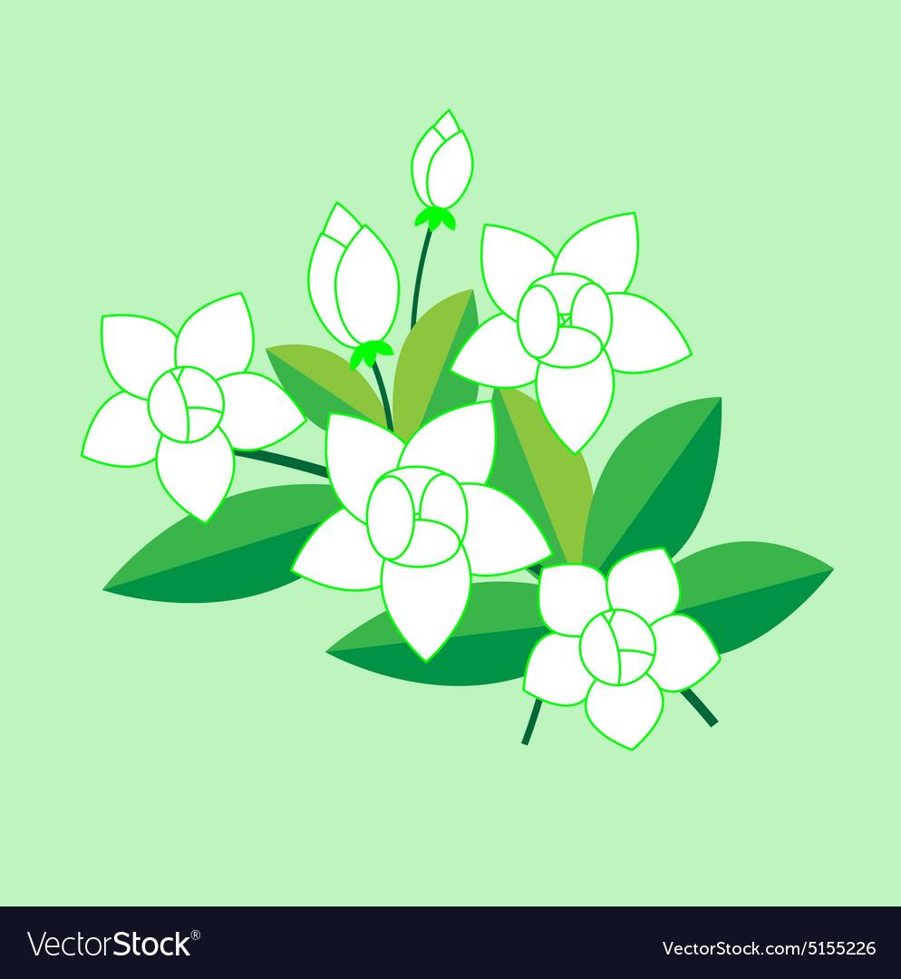 Jasmine flower royalty free vector image vectorstock jasmine flower vector image izmirmasajfo