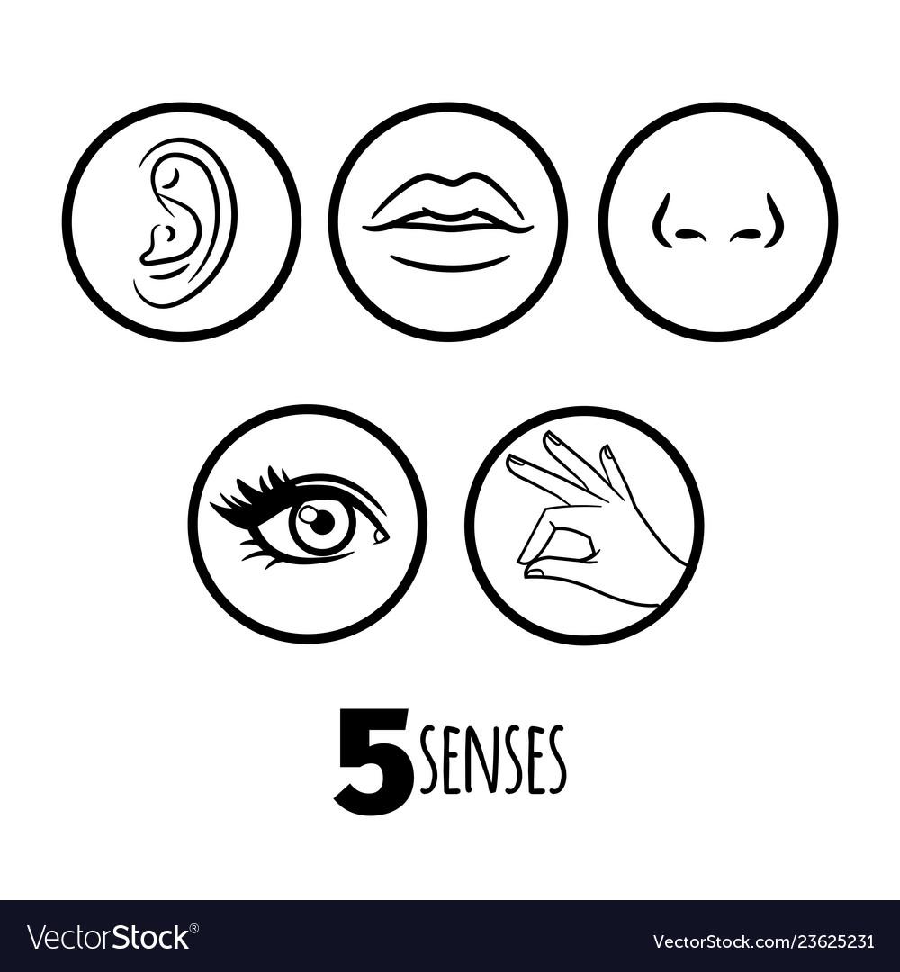 Five senses outline icons of set
