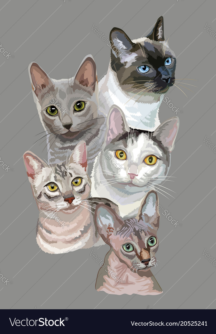 Postcard with cats-1