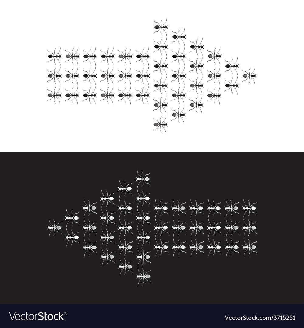 Ants Arrow vector image