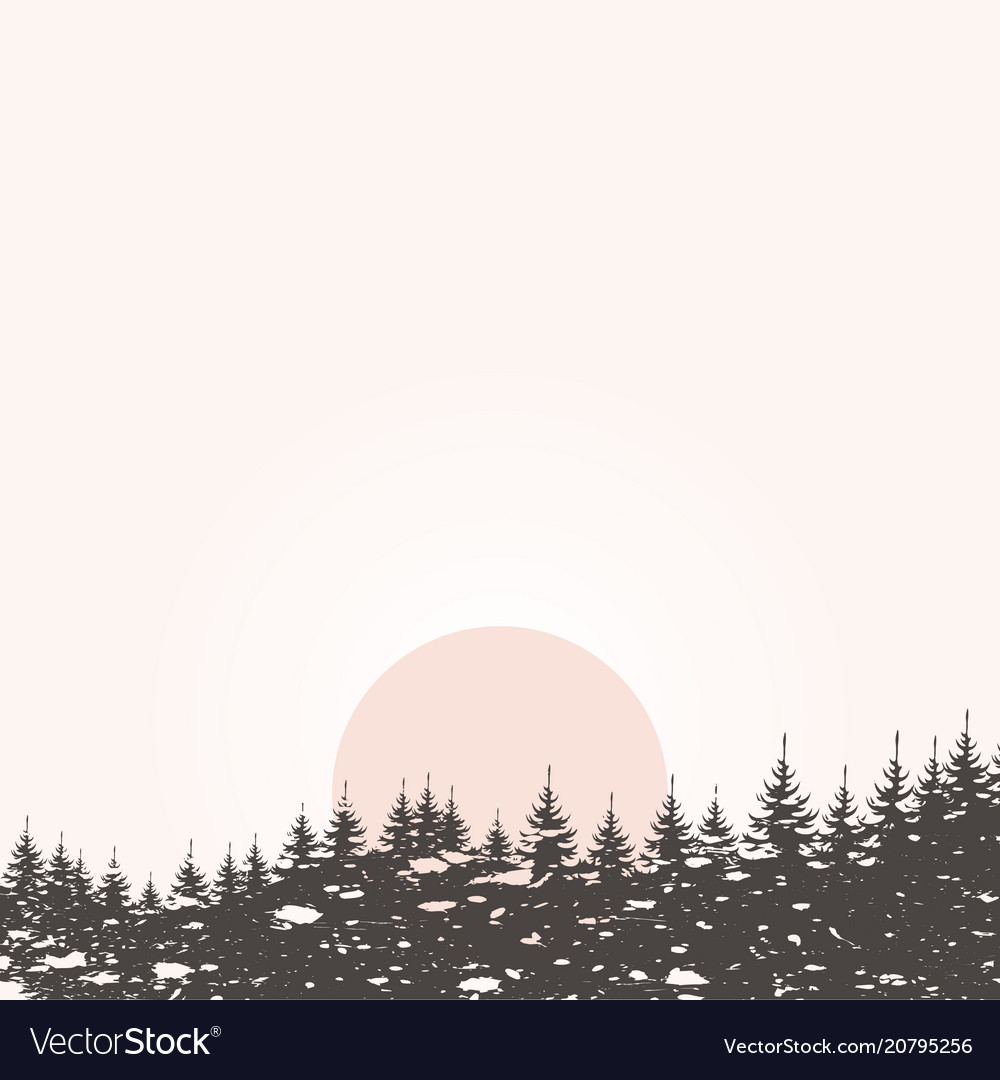 Forest landscape4