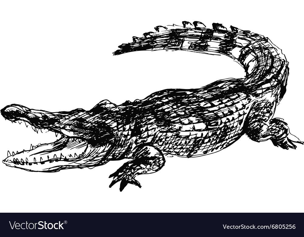 Hand sketch crocodile