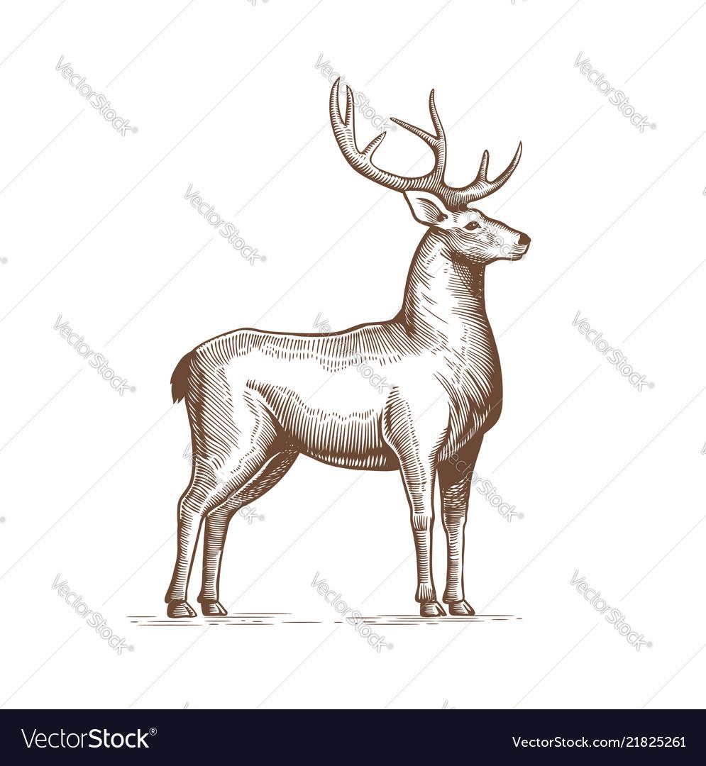 A deer drawing hand in vintage