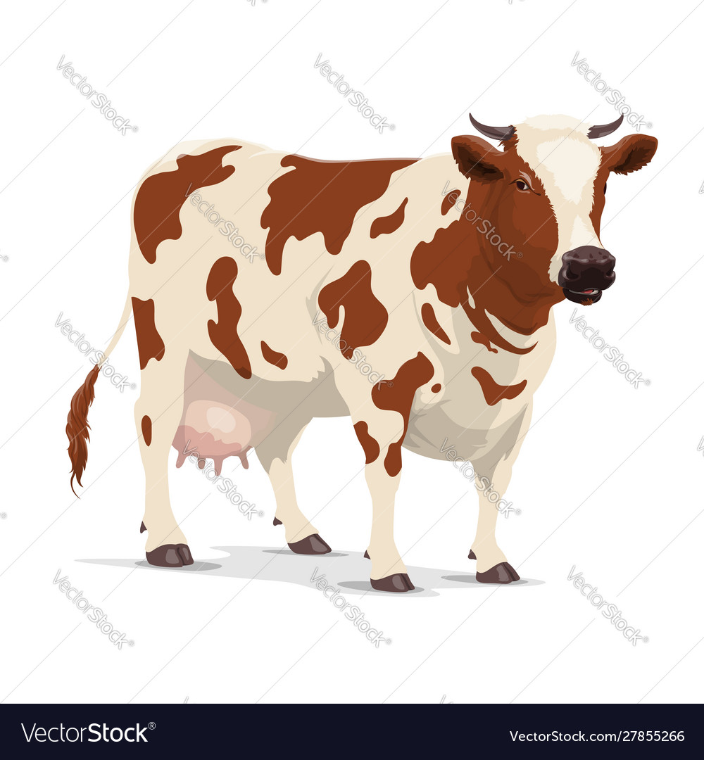 Cow farm animal white and brown heifer cattle