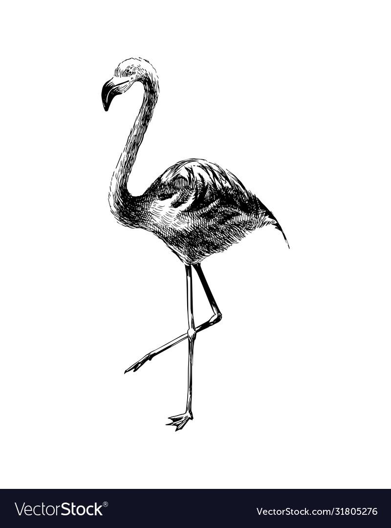 Hand drawn black and white flamingo