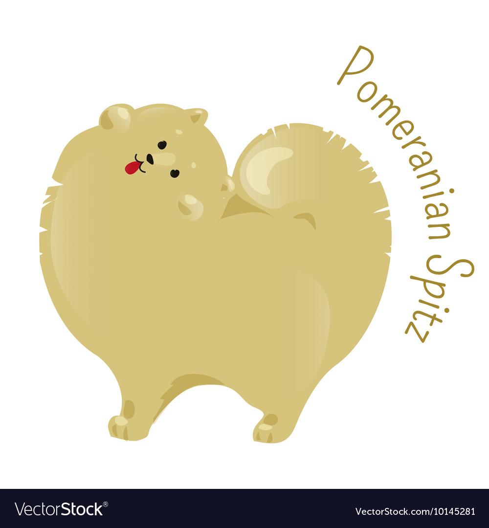 Pomeranian spitz isolated on white background vector image