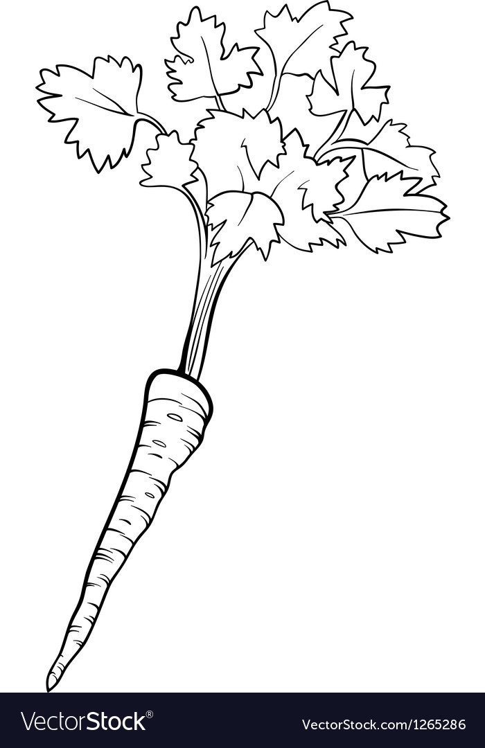 Parsley vegetable cartoon for coloring book vector image