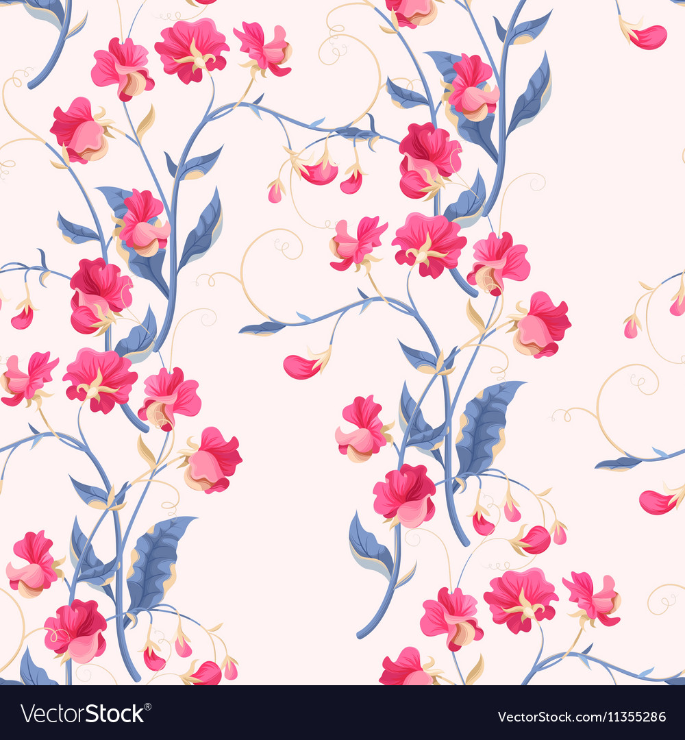 Seamless sweetpea flowers vector image