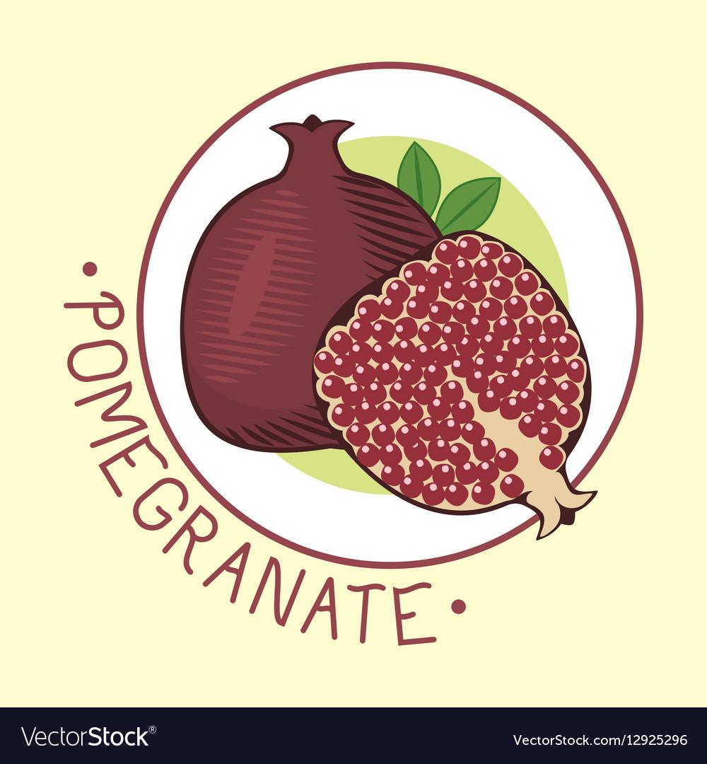 Decorative ornamental pomegranate fruit vector image