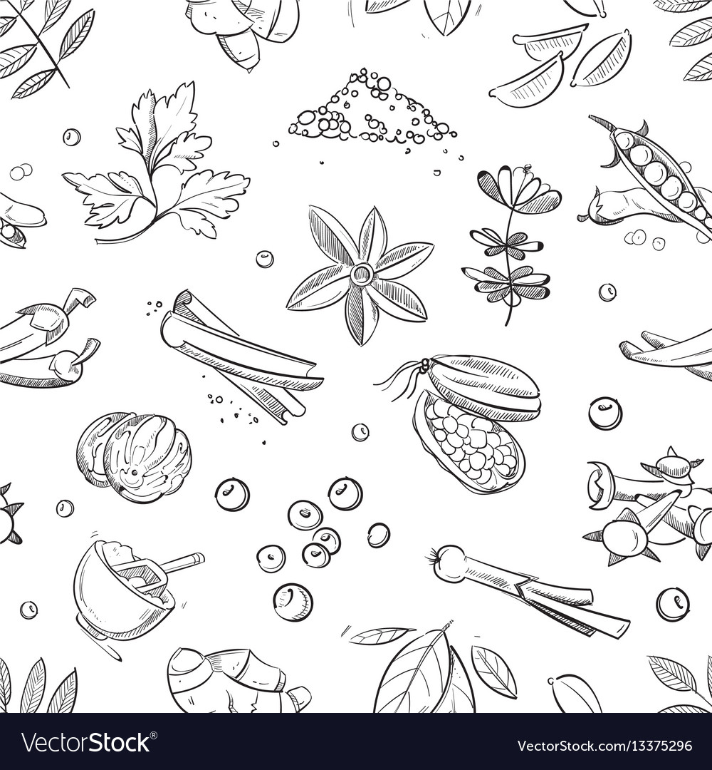 Fresh herbs and spices doodle hand drawn