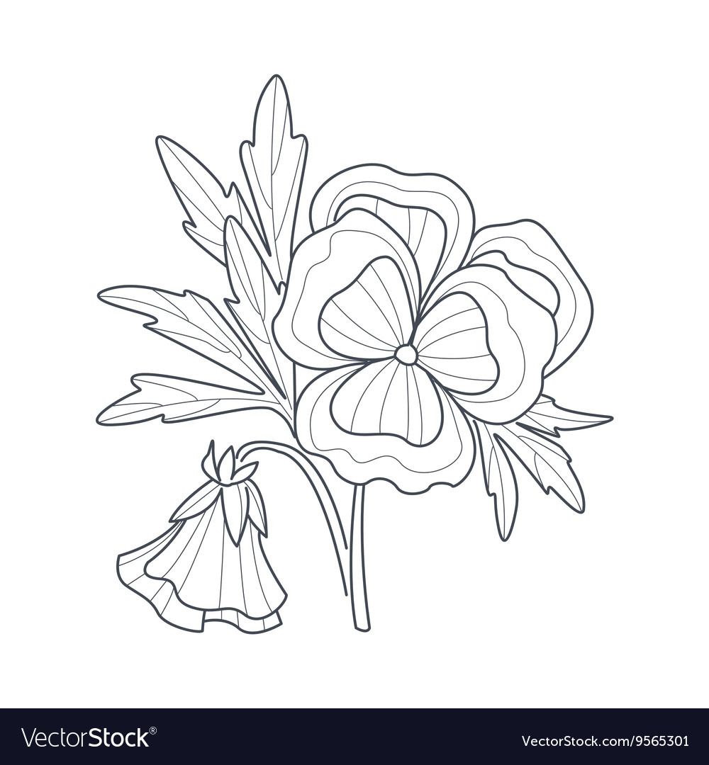 Pansy Flower Monochrome Drawing For Coloring Book