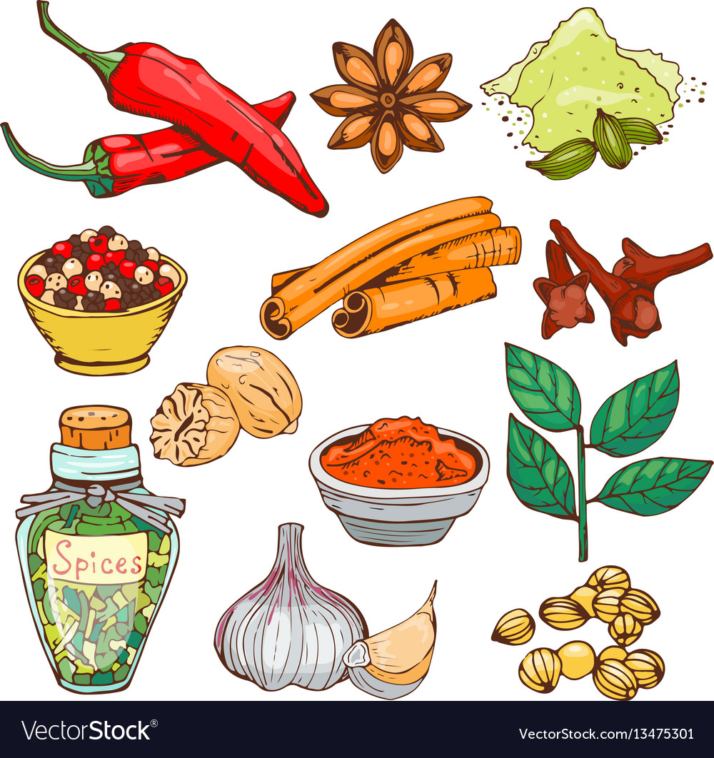 Spices seasoning hand drawn style food herbs