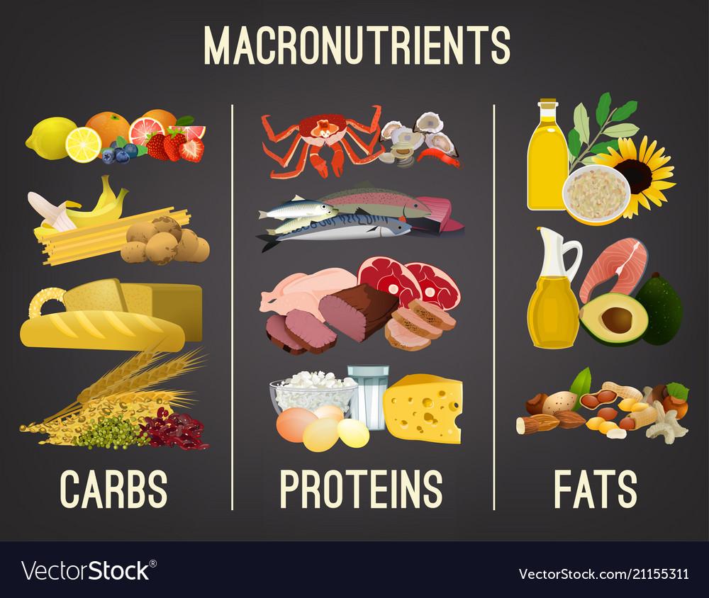 Main Food Groups Royalty Free Vector Image Vectorstock