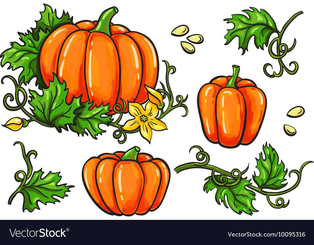 Pumpkin drawing set Isolated hand drawn
