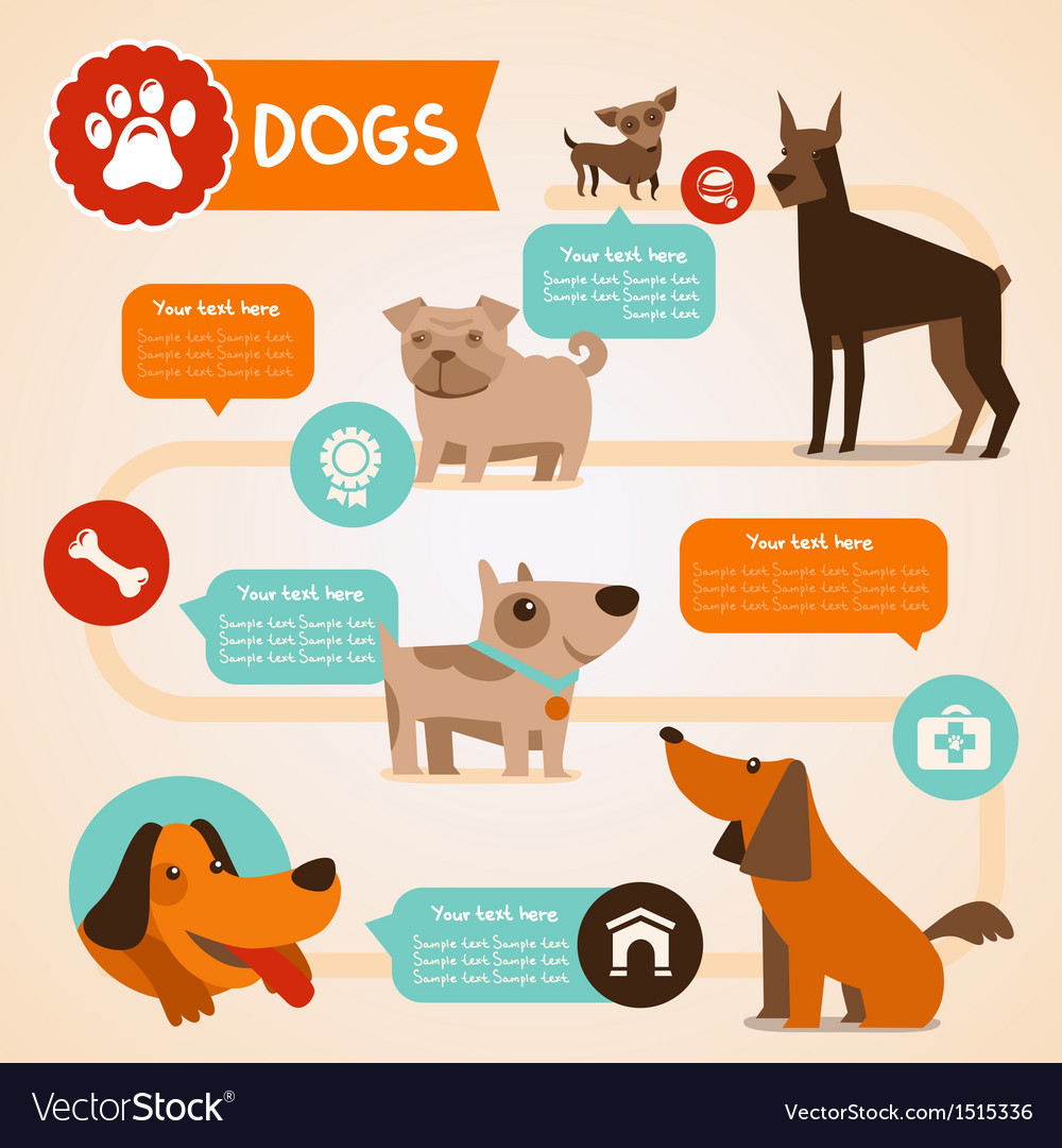 Dogs infographics vector image