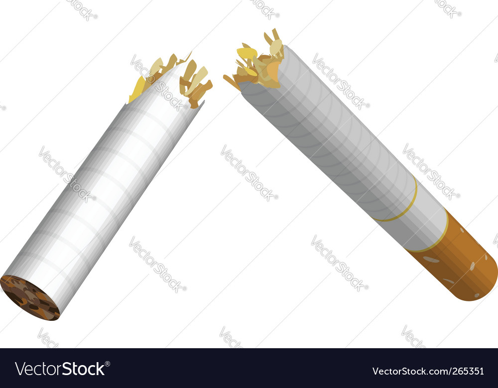 Broken cigarette vector image