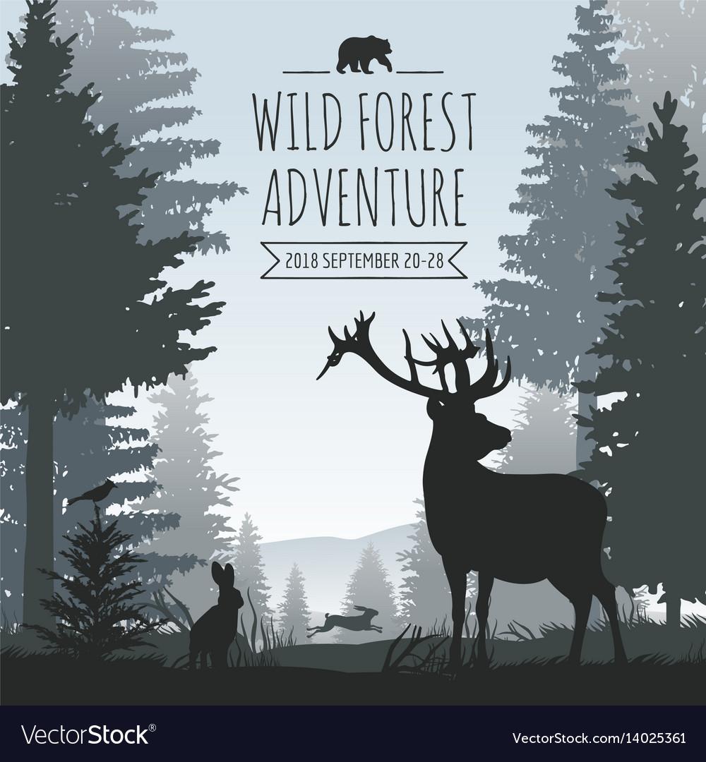 Wildlife foggy coniferous forest background