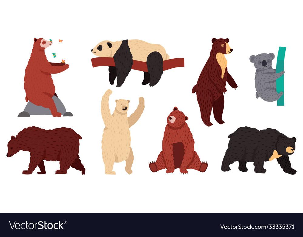 Bears species wild mammal characters furry