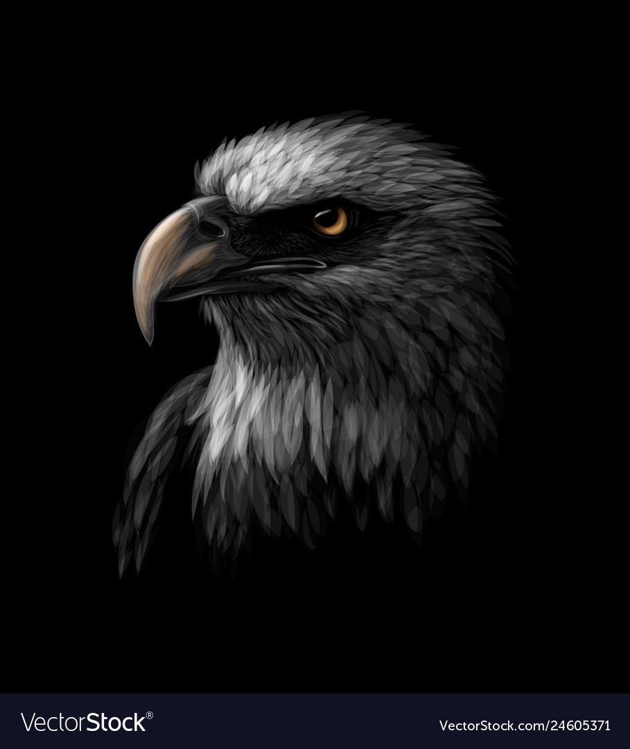 Portrait of a head of a bald eagle on a black