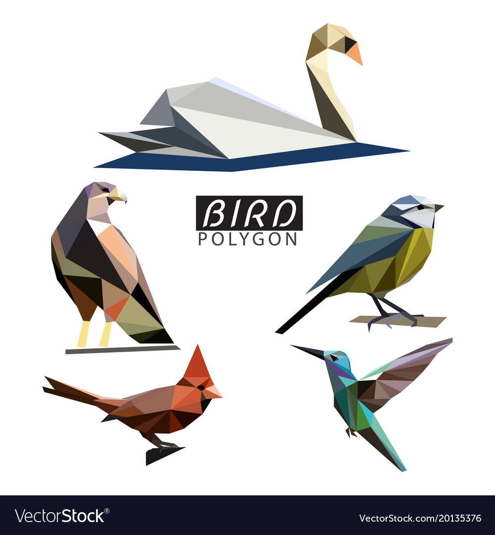 Bird polygon