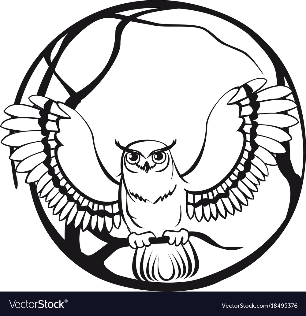 Black and white owl sitting on a branch tree