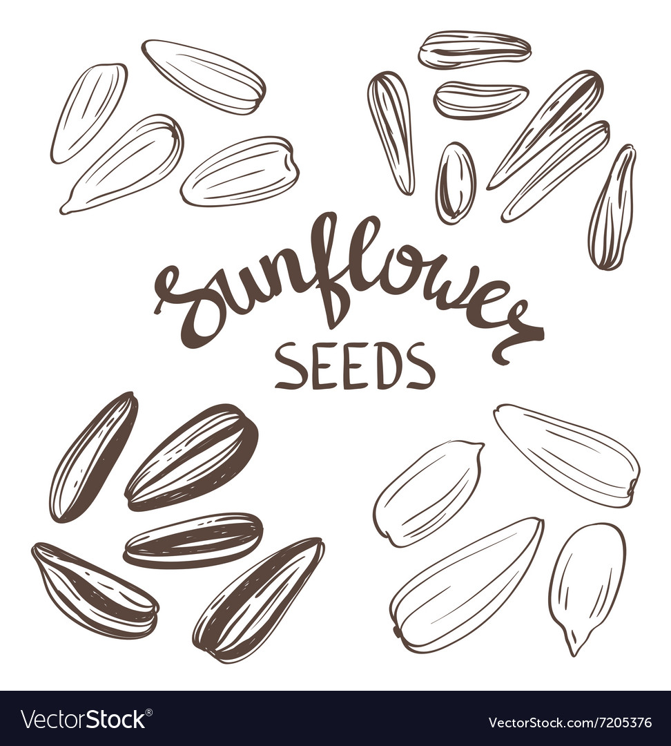 Set of Sunflower seeds with Vintage Stylized