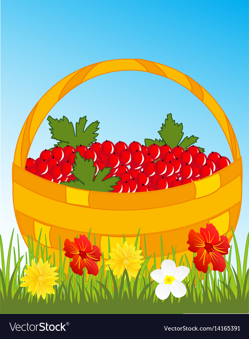 Basket with berry