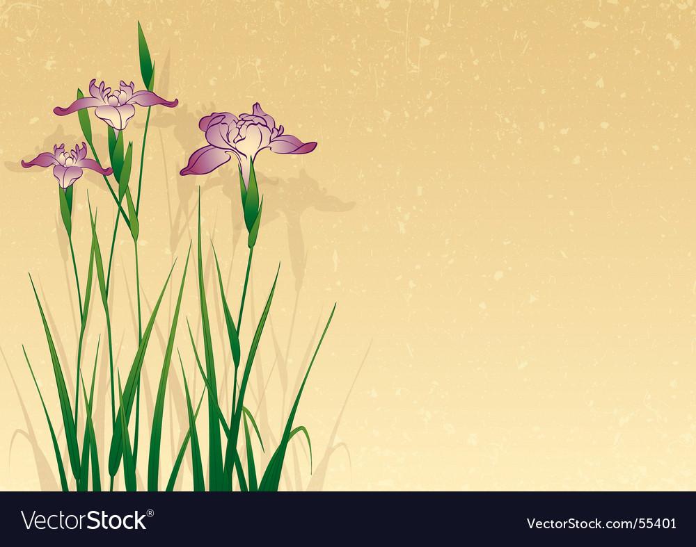 Iris background vector image