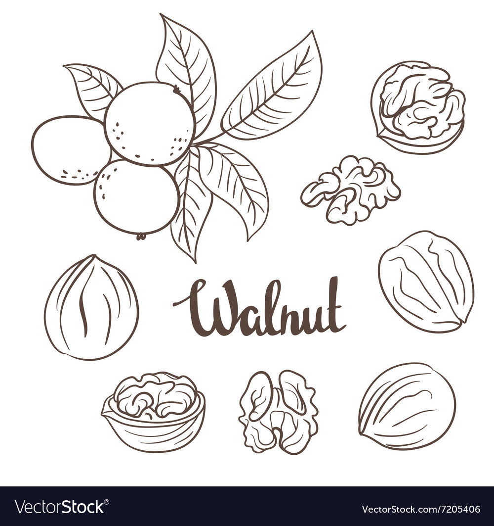 Walnuts with leaves and dried walnuts isolated on