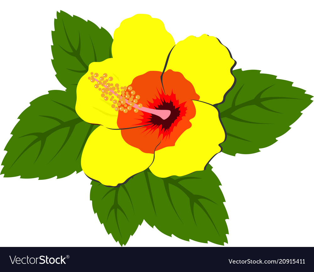 Beautiful red hibiscus flowers with leaves vector image izmirmasajfo
