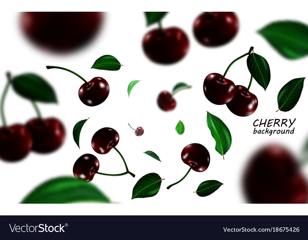 Falling black cherries elements realistic cherry vector image
